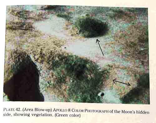 Vegetation auf der Mondrückseite.